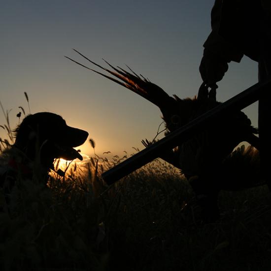 Utah Pheasant Hunting Lodge