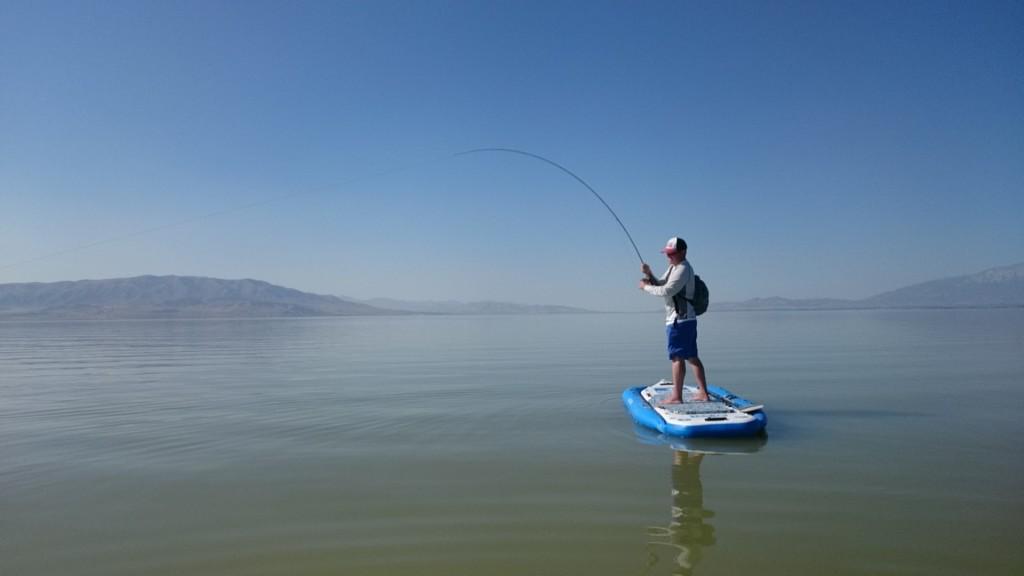 carp, utah, utah lake, fish
