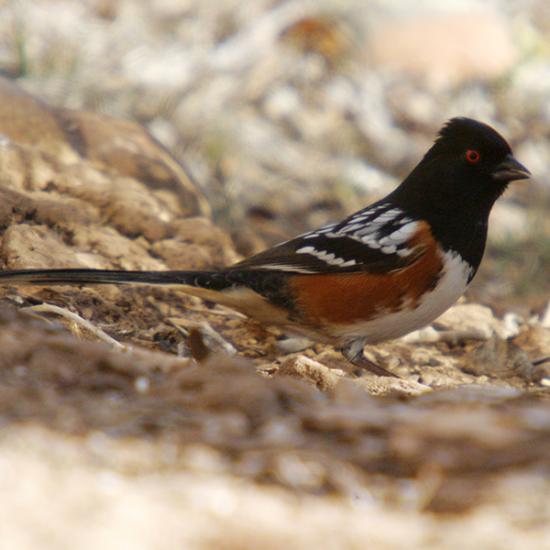 Bird watching at Falcon's Ledge
