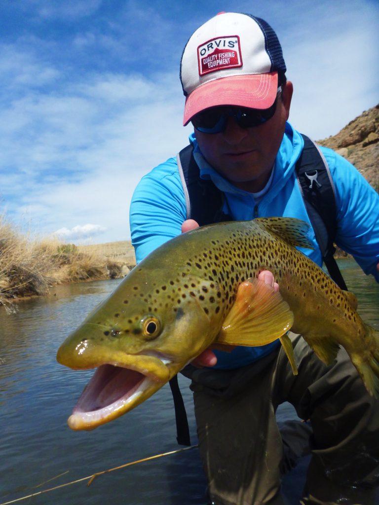 trout, fish, brown trout, orvis, utah