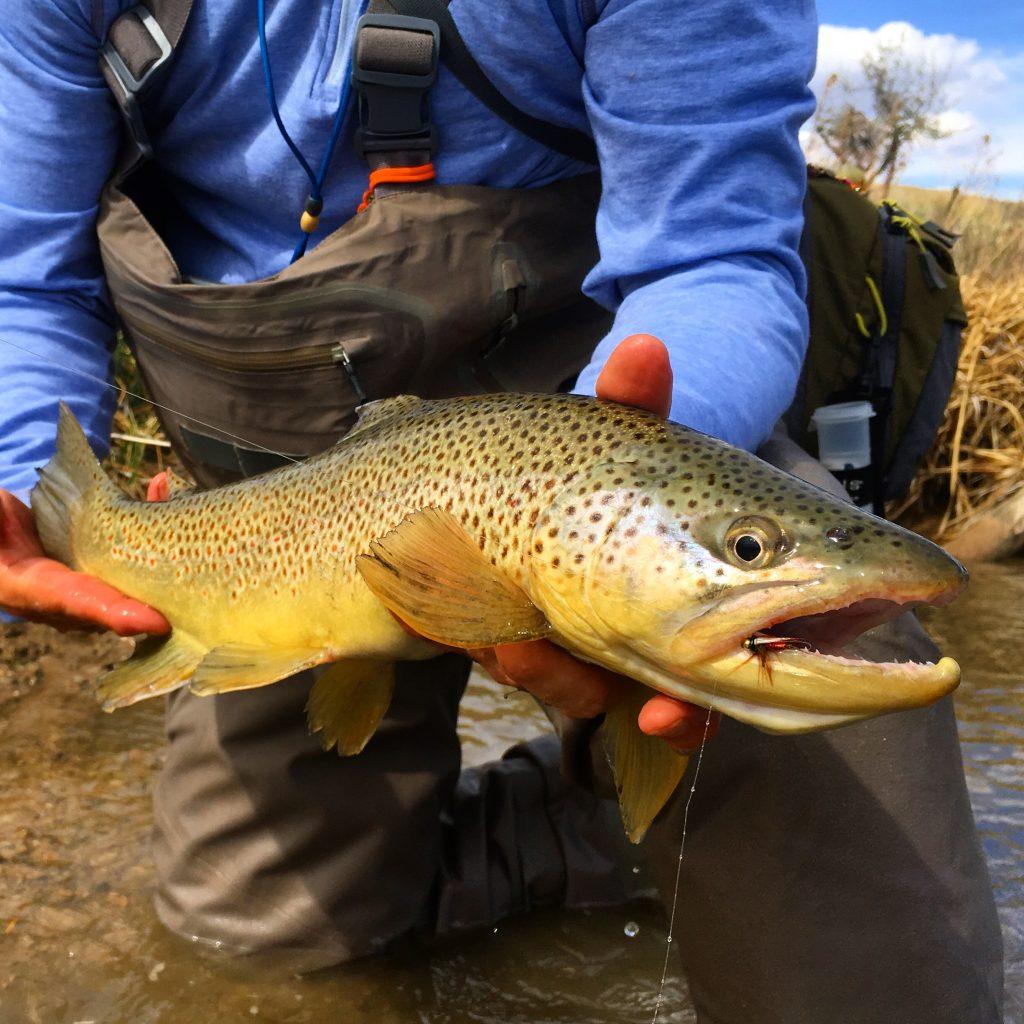 trout, orvis, utah, fly fishing, fishing