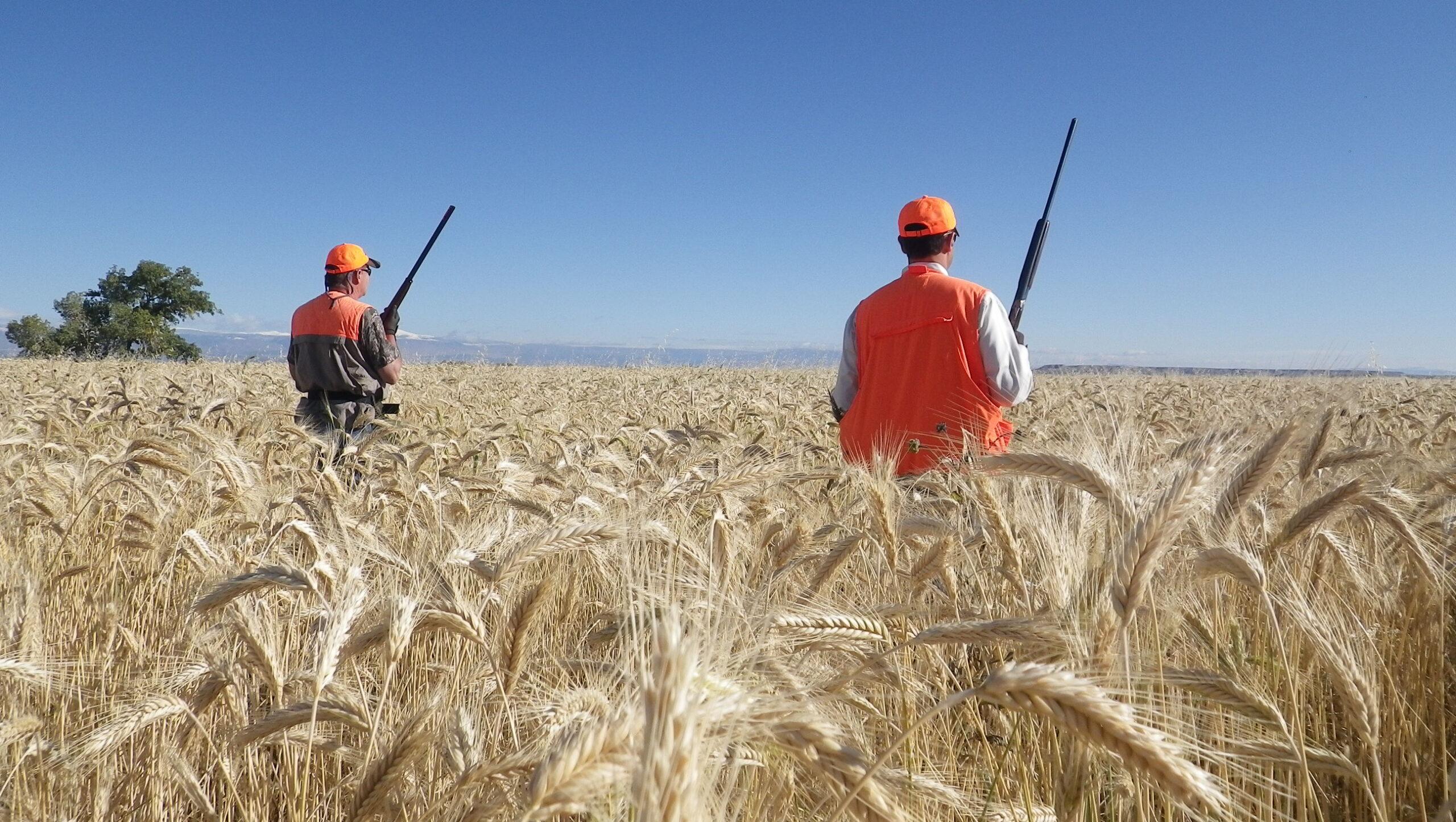 Orvis Pheasant Hunting