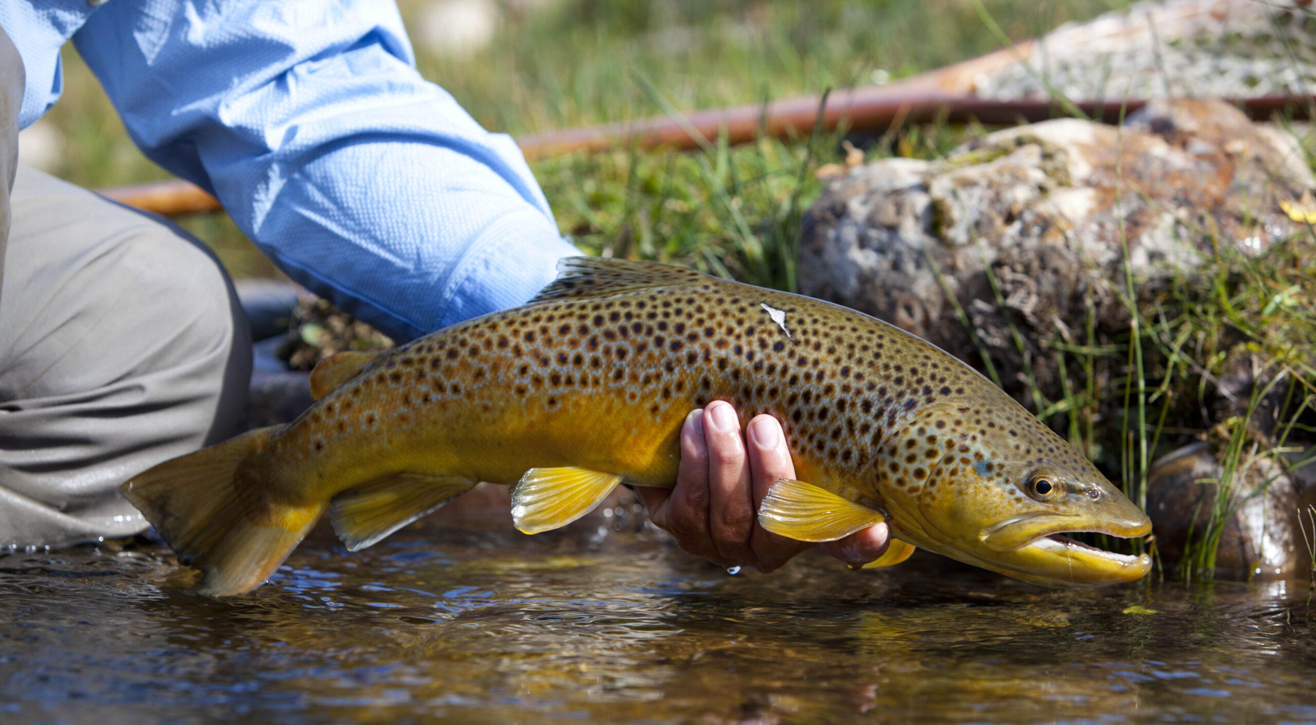 Utah River Fishing